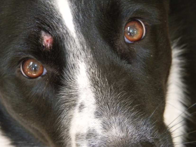 Using Home Remedies To Combat Ringworm In Dogs